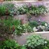 Terraced planters in Maida Vale garden