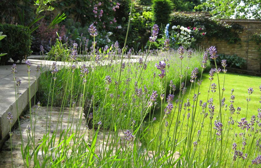 Diana milner garden design hampstead garden for Garden design level 3